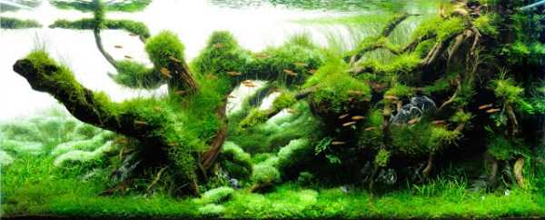 best-aquarium-underwater-decoration-ideas (31)