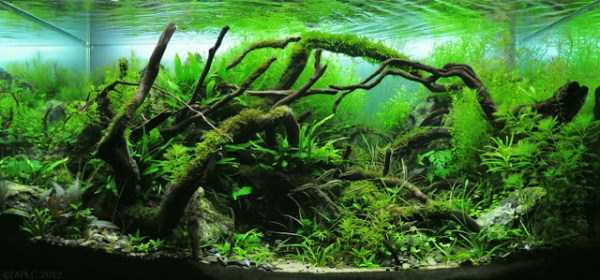 best-aquarium-underwater-decoration-ideas (32)