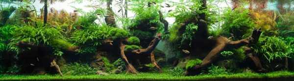 best-aquarium-underwater-decoration-ideas (34)