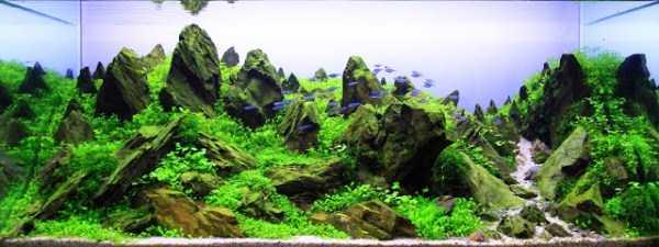 best-aquarium-underwater-decoration-ideas (35)