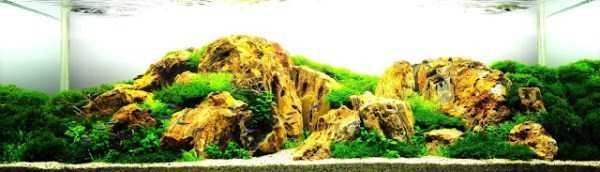 best-aquarium-underwater-decoration-ideas (39)