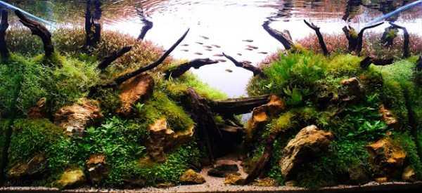 best-aquarium-underwater-decoration-ideas (40)