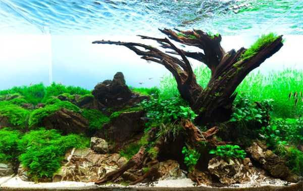best-aquarium-underwater-decoration-ideas (41)