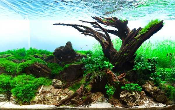 best-aquarium-underwater-decoration-ideas (41)
