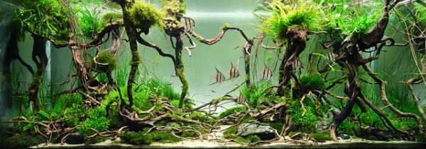best-aquarium-underwater-decoration-ideas (42)
