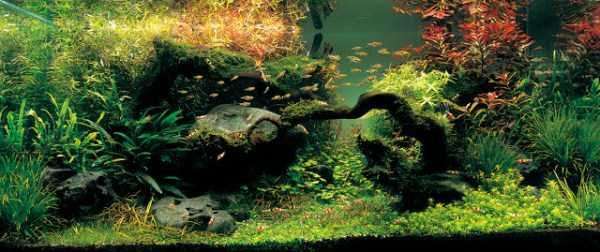 best-aquarium-underwater-decoration-ideas (44)