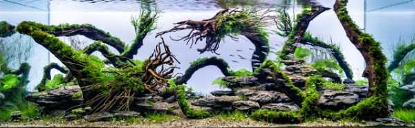 best-aquarium-underwater-decoration-ideas (45)