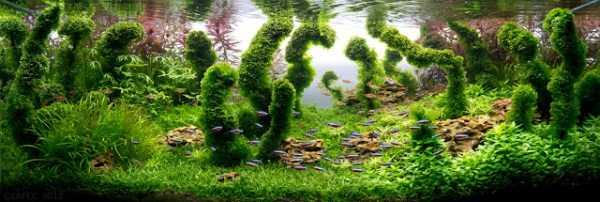 best-aquarium-underwater-decoration-ideas (46)