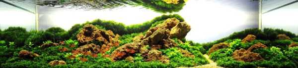 best-aquarium-underwater-decoration-ideas (47)