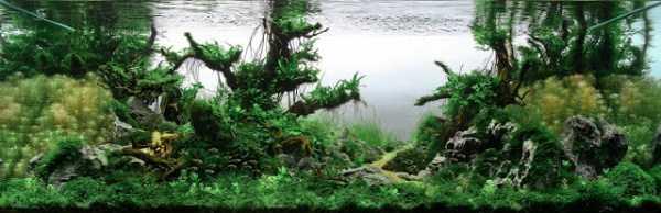 best-aquarium-underwater-decoration-ideas (48)