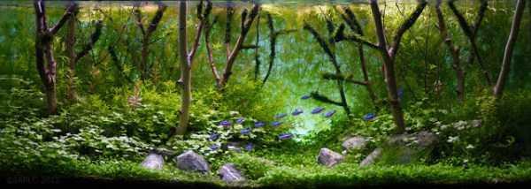 best-aquarium-underwater-decoration-ideas (49)