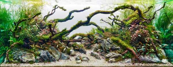 best-aquarium-underwater-decoration-ideas (50)