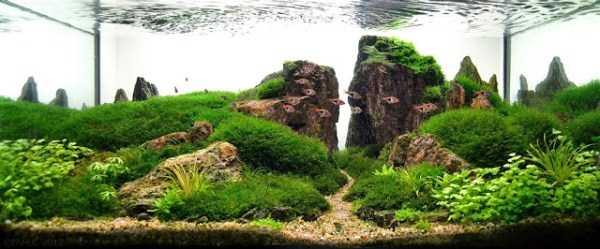 best-aquarium-underwater-decoration-ideas (53)