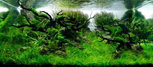 best-aquarium-underwater-decoration-ideas (54)