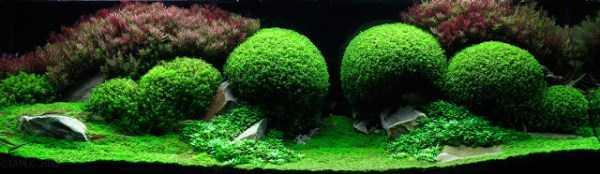 best-aquarium-underwater-decoration-ideas (55)