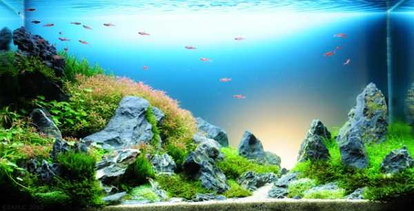 best-aquarium-underwater-decoration-ideas (56)