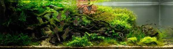 best-aquarium-underwater-decoration-ideas (57)
