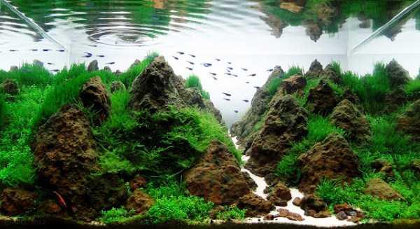 best-aquarium-underwater-decoration-ideas (58)