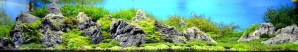 best-aquarium-underwater-decoration-ideas (59)