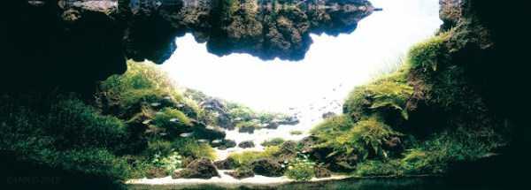 best-aquarium-underwater-decoration-ideas (6)