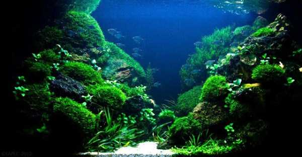 best-aquarium-underwater-decoration-ideas (60)