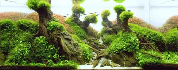 best-aquarium-underwater-decoration-ideas (62)