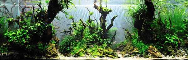 best-aquarium-underwater-decoration-ideas (63)