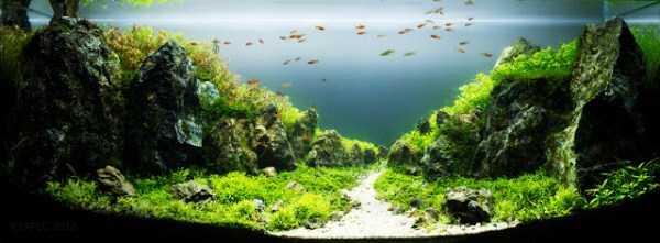 best-aquarium-underwater-decoration-ideas (64)