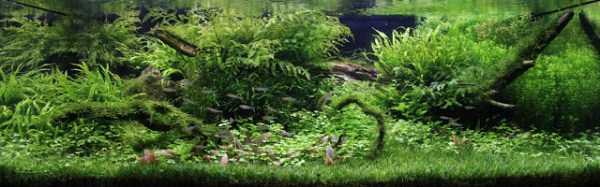 best-aquarium-underwater-decoration-ideas (65)
