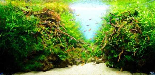 best-aquarium-underwater-decoration-ideas (66)