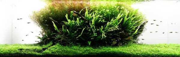 best-aquarium-underwater-decoration-ideas (67)
