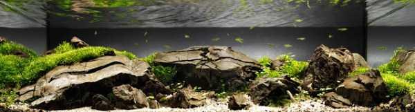 best-aquarium-underwater-decoration-ideas (69)