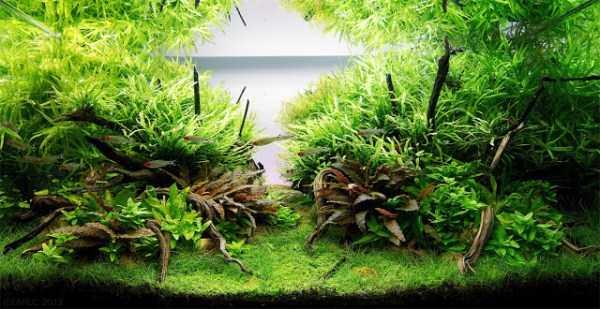 best-aquarium-underwater-decoration-ideas (7)