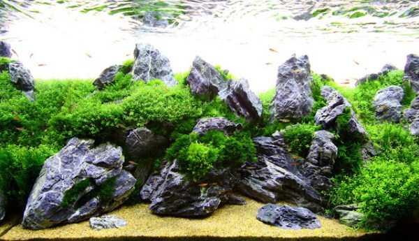 best-aquarium-underwater-decoration-ideas (70)