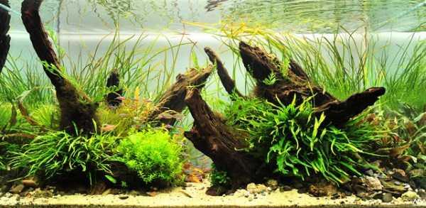 best-aquarium-underwater-decoration-ideas (71)