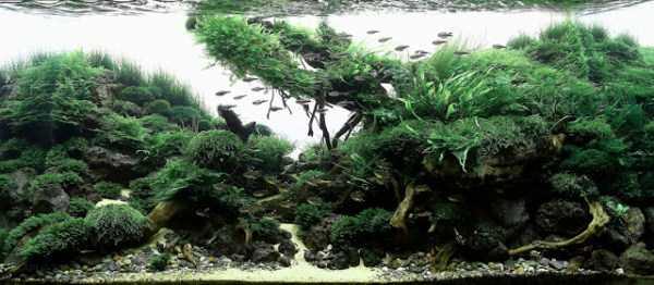 best-aquarium-underwater-decoration-ideas (72)