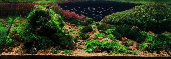 best-aquarium-underwater-decoration-ideas (73)