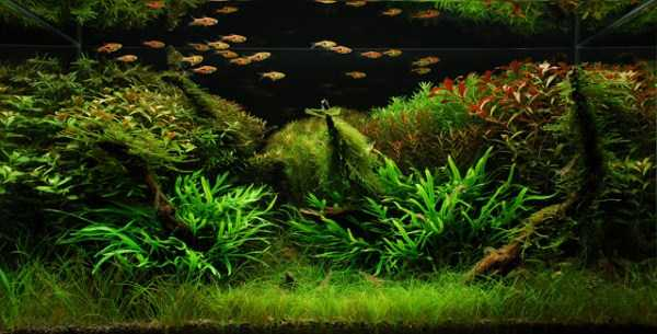 best-aquarium-underwater-decoration-ideas (74)