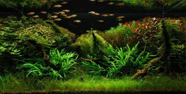 best-aquarium-underwater-decoration-ideas (74)