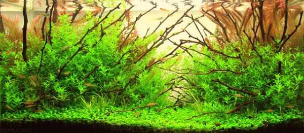 best-aquarium-underwater-decoration-ideas (75)