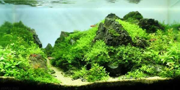 best-aquarium-underwater-decoration-ideas (76)