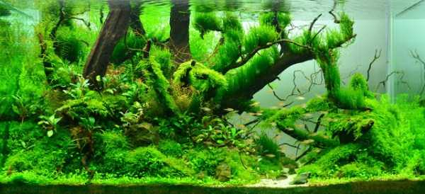 best-aquarium-underwater-decoration-ideas (77)