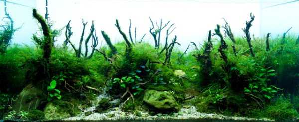 best-aquarium-underwater-decoration-ideas (78)