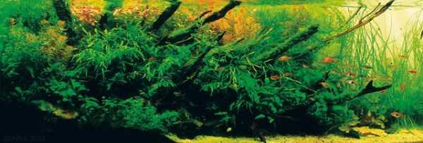 best-aquarium-underwater-decoration-ideas (79)