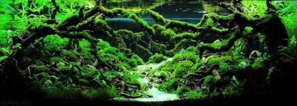 best-aquarium-underwater-decoration-ideas (8)