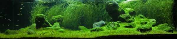 best-aquarium-underwater-decoration-ideas (82)