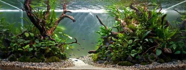 best-aquarium-underwater-decoration-ideas (84)