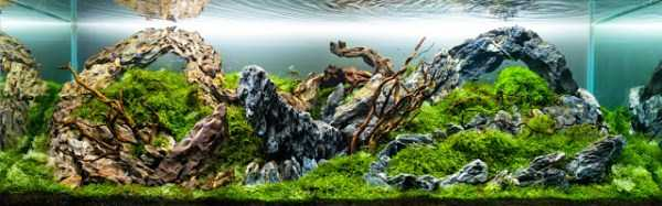 best-aquarium-underwater-decoration-ideas (86)