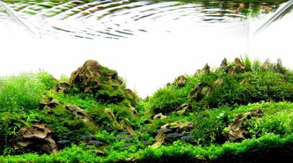 best-aquarium-underwater-decoration-ideas (87)