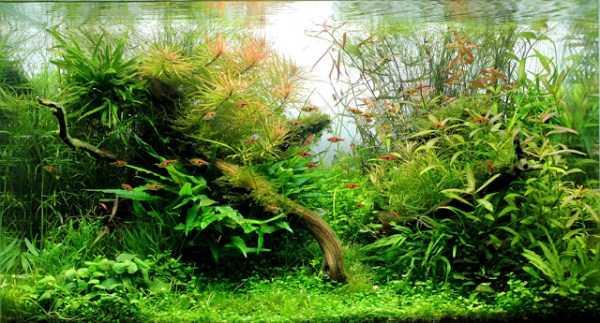 best-aquarium-underwater-decoration-ideas (88)